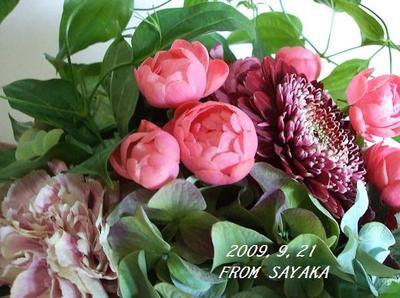 20099_942_sayaka